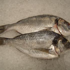 Mick Harlow - Harlow Fish